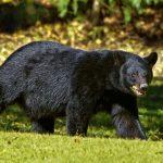 Αλάσκα: Δέχτηκε επίθεση από αρκούδα.. στην τουαλέτα