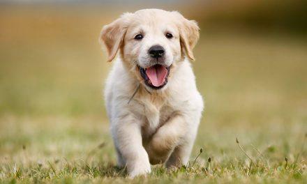 Ζώα συντροφιάς: σημαντικές αλλαγές με ΝΣ του Υπ. Εσωτερικών