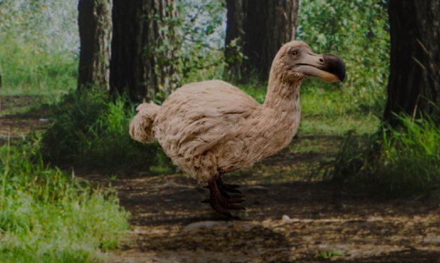 Το WWF «ζωντανεύει» ξανά εξαφανισμένα είδη σε ένα ψηφιακό μουσείο – εικόνες